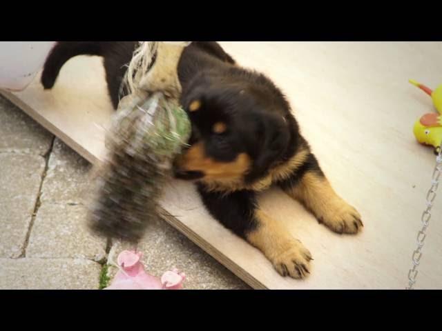 Voordeel 4: belangrijke gegevens over je pup zijn openbaar