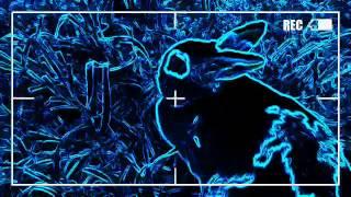 We R Who We R - Bunny MV - Molly