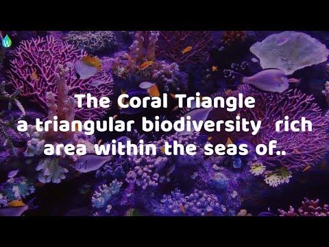 CORAL TRIANGLE DAY 2017 (Waterpedia)