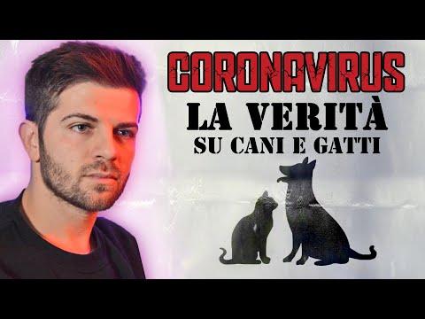 CORONAVIRUS LA VERITA' SU CANI E GATTI