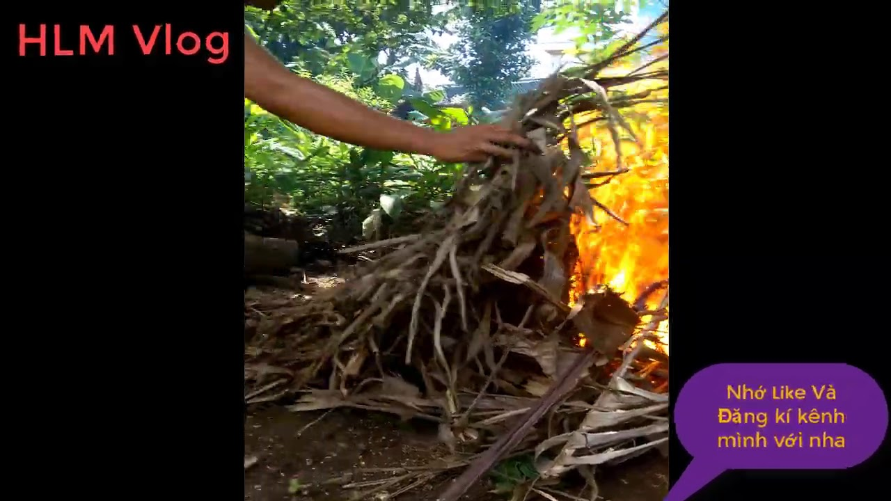 Grilled snakehead fish | Grilled fish with straw | HLM Vlog
