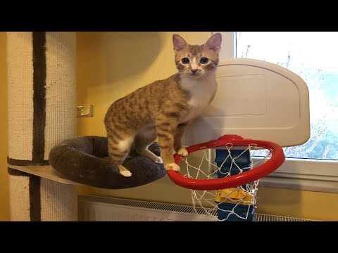 Goalkeeper Cat Tries His Luck at Basketball - Amazing Blocks, Defence & Fails!
