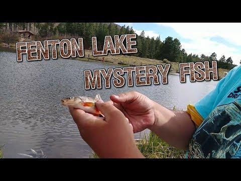 Fenton Lake Mystery Fish