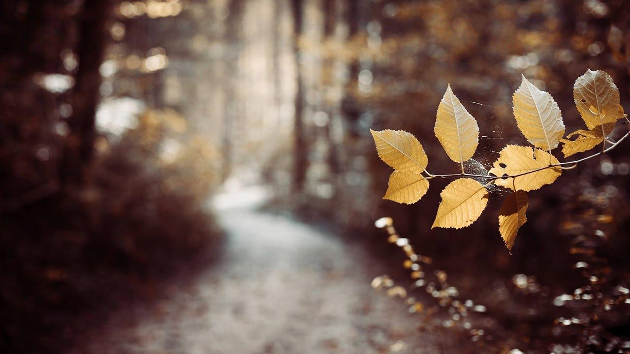last leaf down ghost trails lyrics