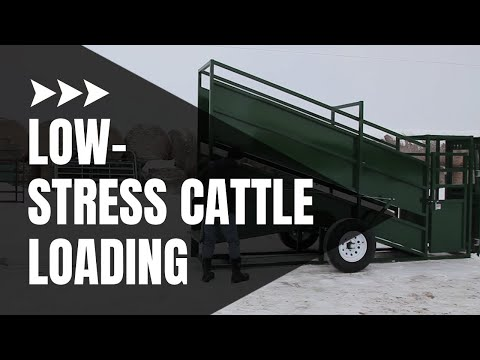 Cattle Loading Chute | Cattle Equipment | Arrowquip