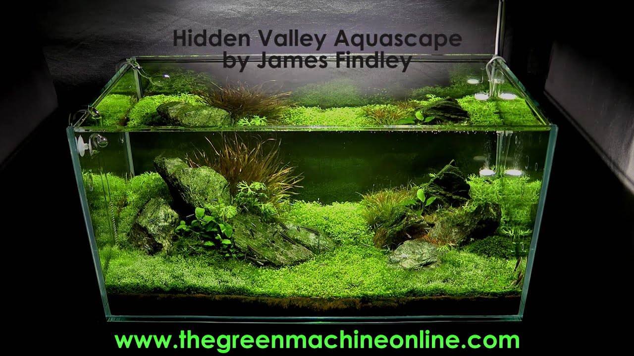 Hidden Valley Aquascape @ The Green Machine - YouTube