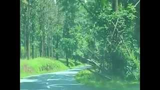 Tholpetty wildlife sanctuary, Wayanad, Kerala