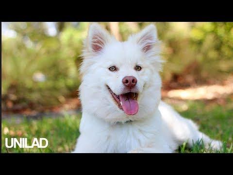 Extremely Needy Dog! | UNILAD