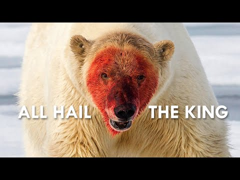 Polar Bear: The King in the North