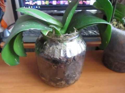 Самая большая ошибка при посадке орхидеи в закрытую систему.