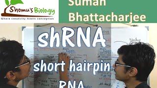 shRNA mechanism   short hairpin RNA mediated knockdown and gene silencing
