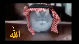 Прикол Мем телевизор ту ту ту на арабском. Мем с котом