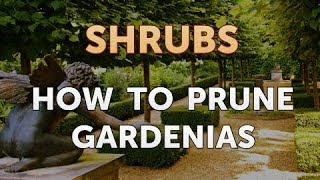 How To Prune Gardenias Youtube