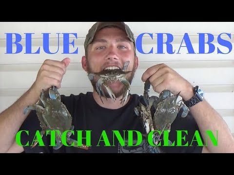 How To Catch And Clean Blue Crab