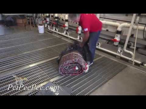 How the carpet cleaner will clean my Oriental rug
