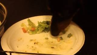 Vegetarian Dog (buddy The Dachshund)