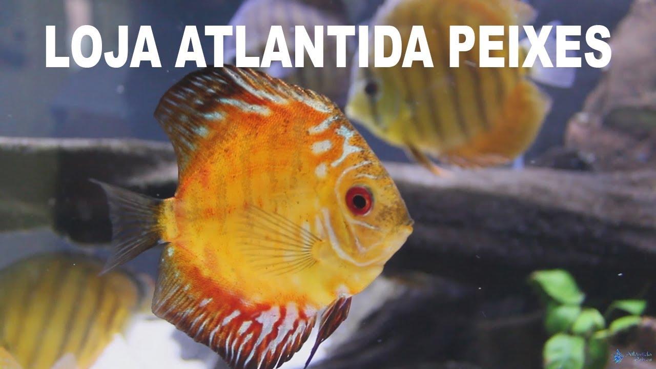 Loja de Aquarismo Atlântida Peixes Campinas
