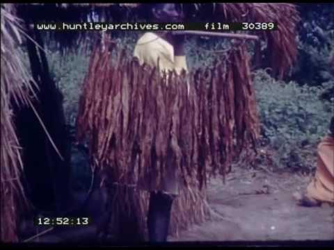 Tobacco Manufacture, 1960s - Film 30389