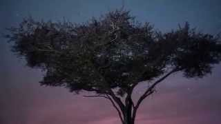 CHILLOUT MUSIC-MUSICA RELAJANTE etnica sabana africana RELAXING MUSIC. AFRICAN SAVANNAH.