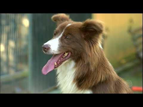 A inteligência dos cães não depende da raça, diz pesquisa