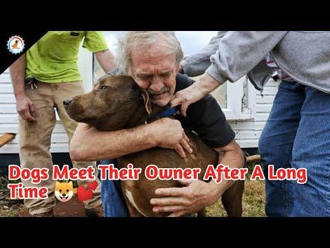 4 ऐसे उदास कुत्ते जो अभी भी अपने मालिक से मिलने का इंतज़ार कर रहे है | 4 DOGS WAITING FOR THEIR OWNER