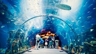 Dubai Mall World Largest Shopping Mall Indoor Outdoor Aquarium Fountain Amazing Show.