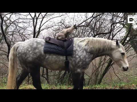 Horse-Riding Cat Enjoys a Country Stroll on the Back of Best Friend