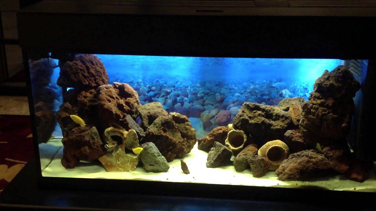 Il mio acquario con ciclidi del lago malawi youtube for Ciclidi africani