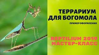 Террариум для богомола. Reptilium 2019 (весна). Мастер-класс по оформлению
