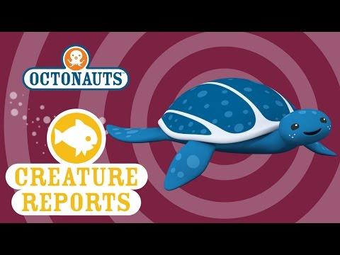 Octonauts: Creature Reports - Leatherback Turtles