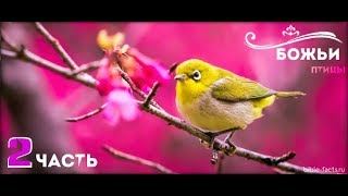 Топ - Самые красивые птицы мира | The most beautiful birds in the world