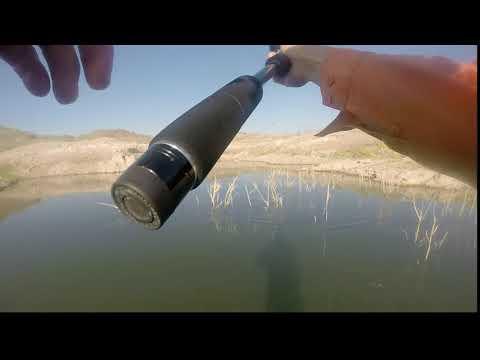 First Time Fishing at Alamo Lake - HPH