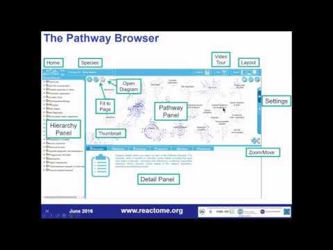 Reactome: Exploring Biological Pathways (demo)