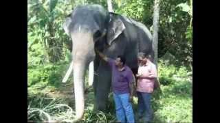 ELAMKAVU VISHNU NARAYANAN   /    elephant /   ITHITHANAM
