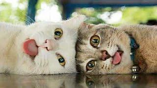 😻котики! Funny Cats! TOP подборка!