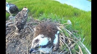 Milford Point Osprey Connectic…