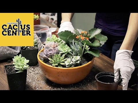 How To Create A Succulent Container Garden & Basic Care at The Hill Avenue Branch Library