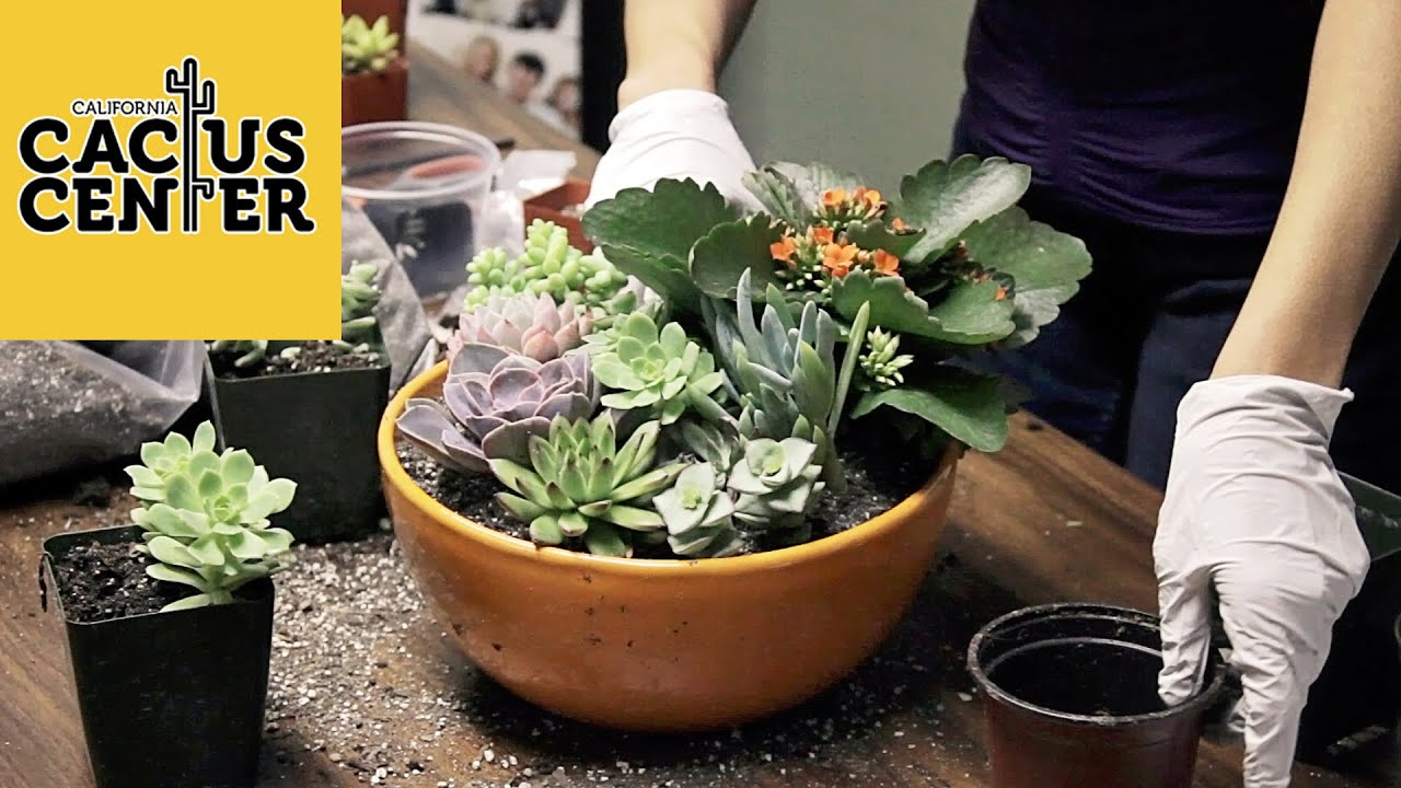 How to create a succulent container garden basic care at the hill avenue branch library youtube - How to make a succulent container garden ...