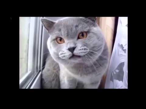 Top 20 des chats les plus drôles et mignons.
