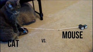 Minnie's Epic Standoff with Mousr, the Robot Cat Toy