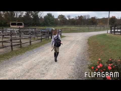 Quicksand//Horse Struggles Edit:Jumper