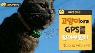 """""""유능하고 용감하다""""... 고양이에게…"""