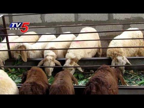 Veterinary Officials  One Day Training Program On Sheep Farming   Hyderabad   Annapurna   TV5 News