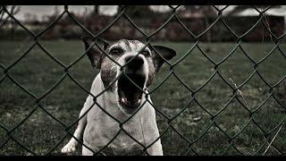 Что делать если Вас укусила собака? Первая помощь.