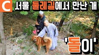 서울 산책길, 스님의 차우차우 '돌'