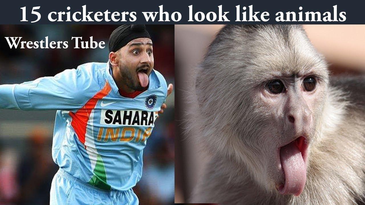 15 cricketers who look like animals | Virat Kohli | Sahaid Afridi | By Wrestlers Tube
