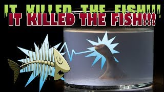 Homunculus Update - IT ELECTROCUTES THE FISH!!!!! thumbnail