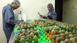 Our Efforts in Morocco I Houbara Conservation