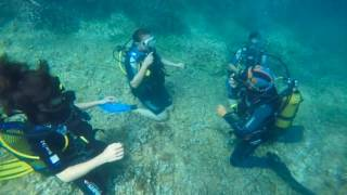A day Diving at Scuba Mallorca