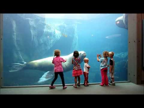 Alaska Sea Life Center, Seward AK